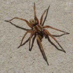 Уничтожение пауков в Кумертау